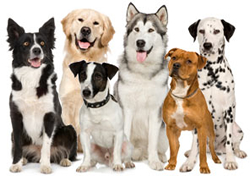 View All Dogs Product Listings