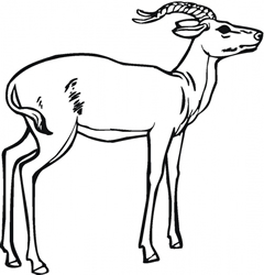View All Antelopes Product Listings